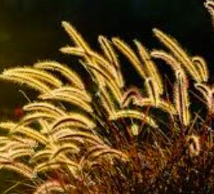 gress i lys.png