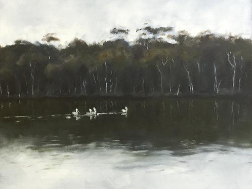 Pelicans crossing