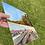 Thumbnail: Jervis Bay Dreaming