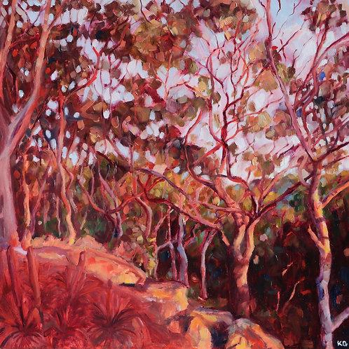 Evening Bush Study 1
