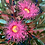 Thumbnail: Mother's Love