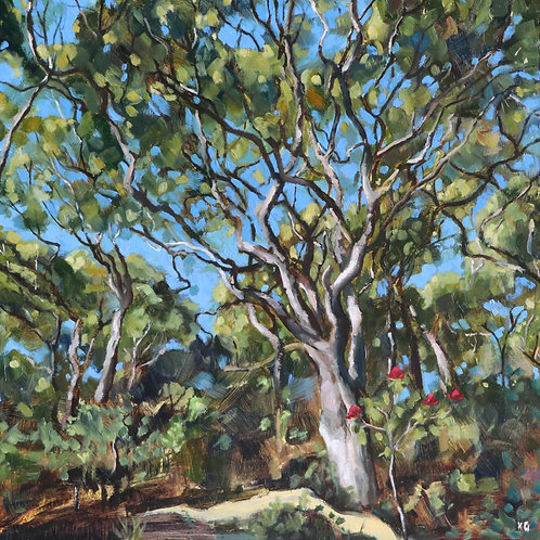 Dappled Light Study 2
