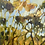 Thumbnail: Angophora Sunset