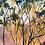 Thumbnail: Harlequin Sunset
