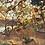 Thumbnail: Sienna Sunset