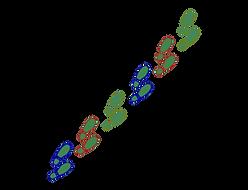 transparent footprints.png
