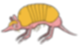 Armadillo_Whole.png
