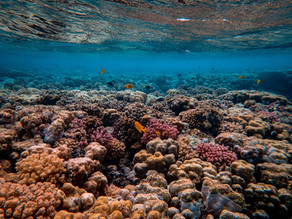 Satellite Technology & Coral Reef Ecosystems