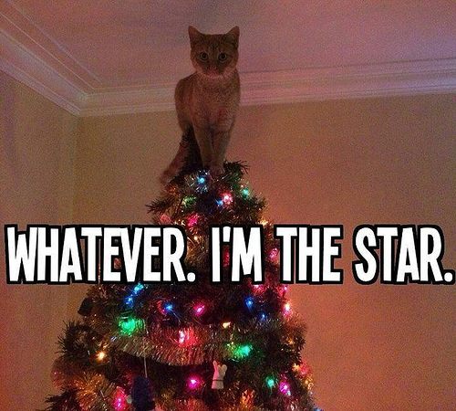 how to keep your cat out of the christmas tree executive edge insurance business auto home life
