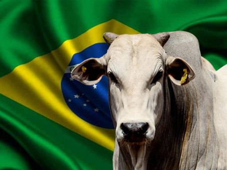 Brasil ganha novo mercado de Exportação de Gado Vivo