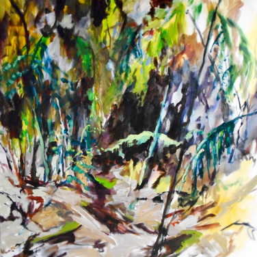 Rainforest Walk through the Balfour Track