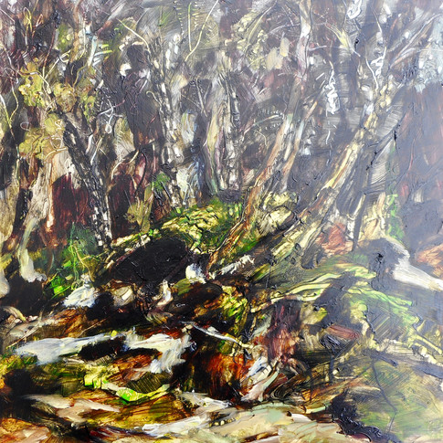 Rainforest Near Arthur River