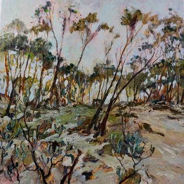 Native Bushland, Oil on Board 110cm x 110cm