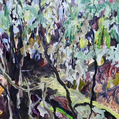 Fallen Tree - Balfour Track