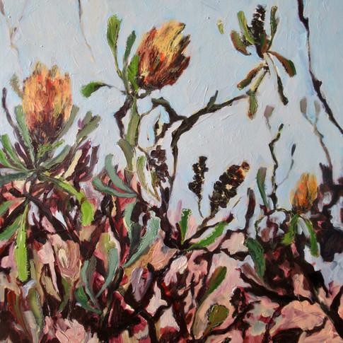 Banksia Serrata - SOLD