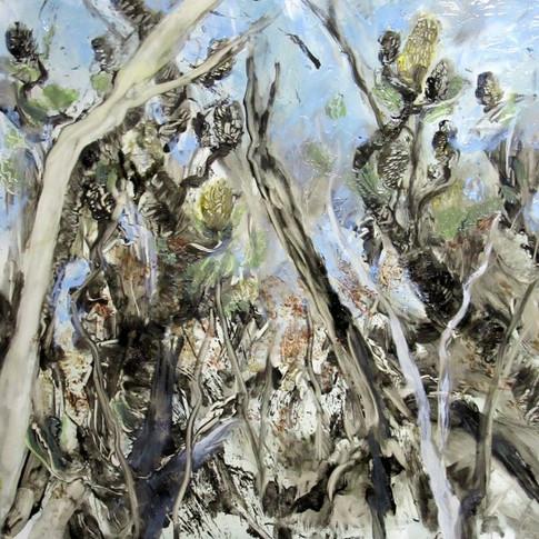 Banksia Scrawl - SOLD