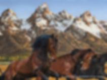 Teton Horseman #141 Large tif - Copy.jpg