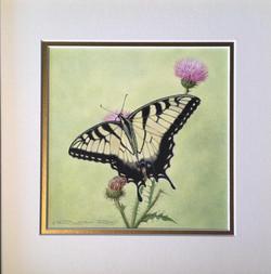 Swallowtail-Watercolor