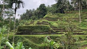 Rundrejse på Bali & Lombok