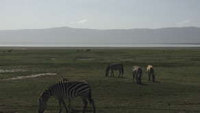 7 gode råd til din safari i Tanzania