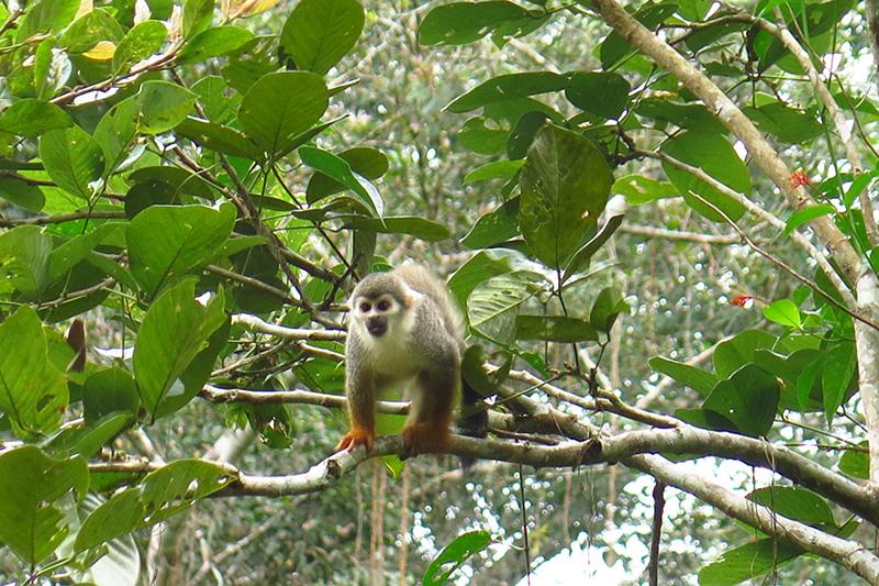 Opička Mono blanco