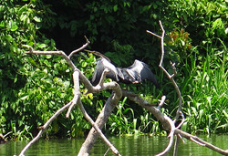Vodní pták - Marine bird
