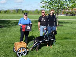 Shine Earns Novice Draft Dog title!!
