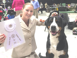EASTER fun in Dekalb, IL - Shine earns Best of Breed and Group 4!