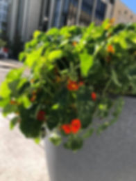 Grow Downtown.jpg