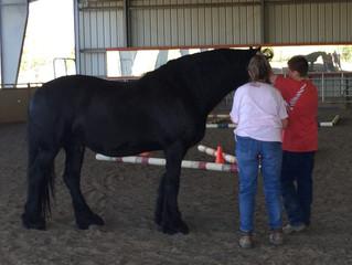 The Heart of Between Horses & Humans Volunteers