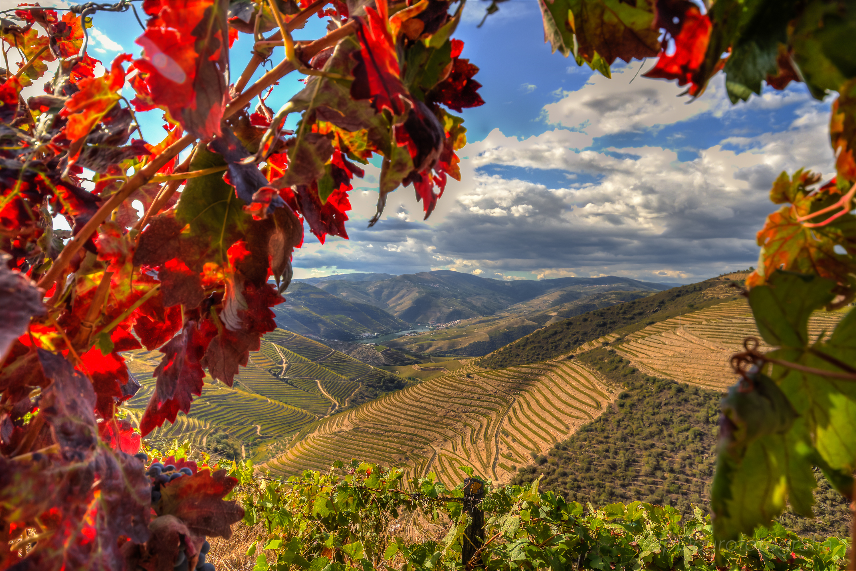 Fotografia de vinhos no Douro