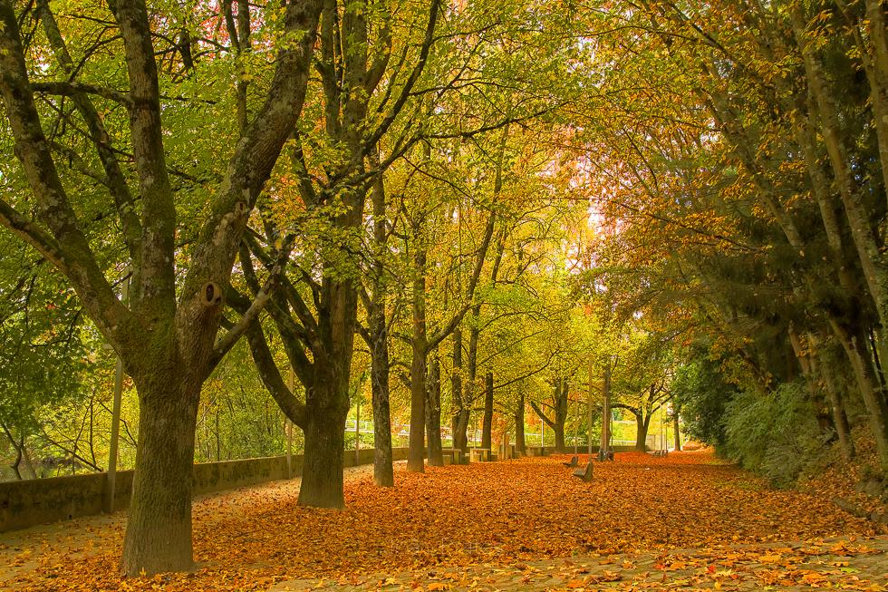 Vila Real - Parque Corgo no Outono
