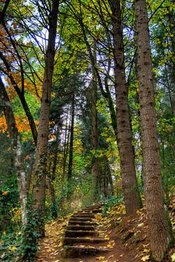Parque Florestal - Vila Real