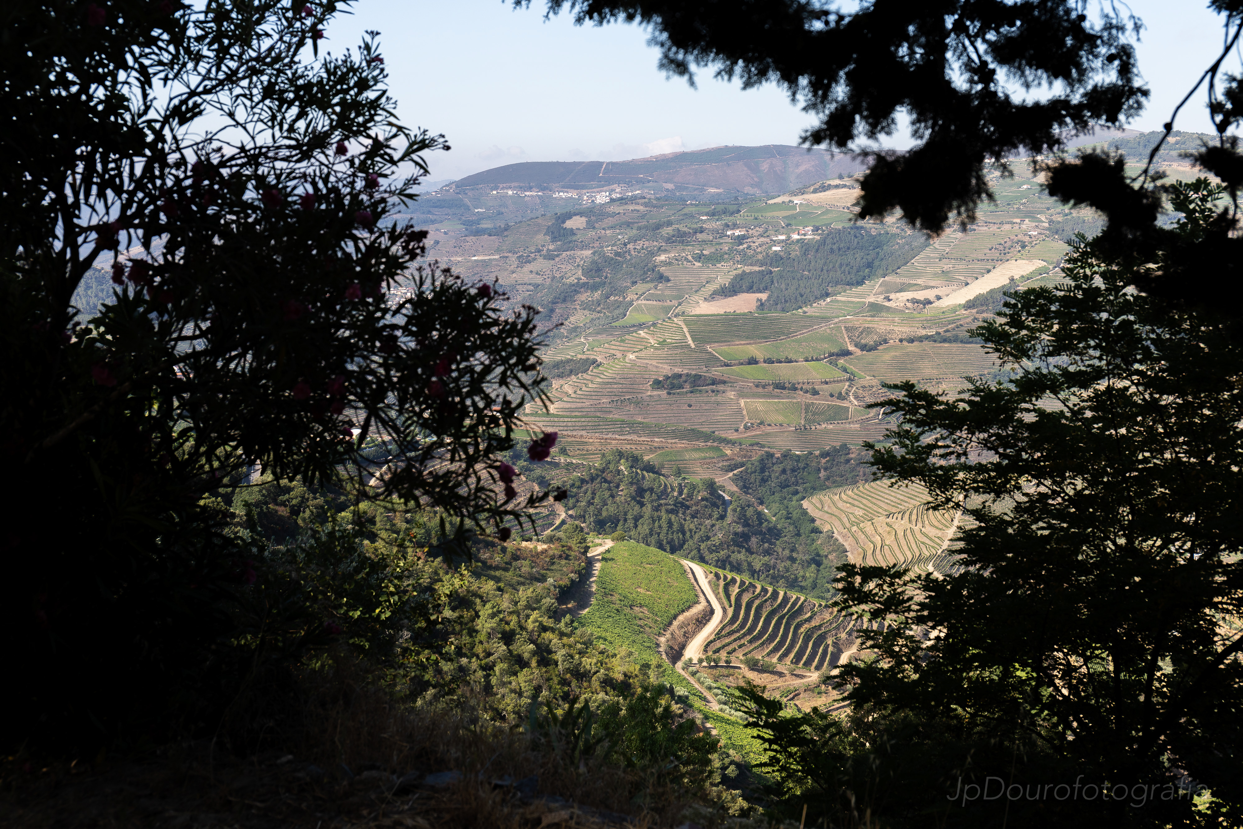 Fotografia quintas do Douro