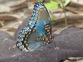butterfly-94744_1920.jpg