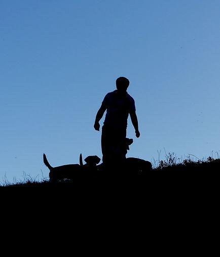 Pet beagle puppies