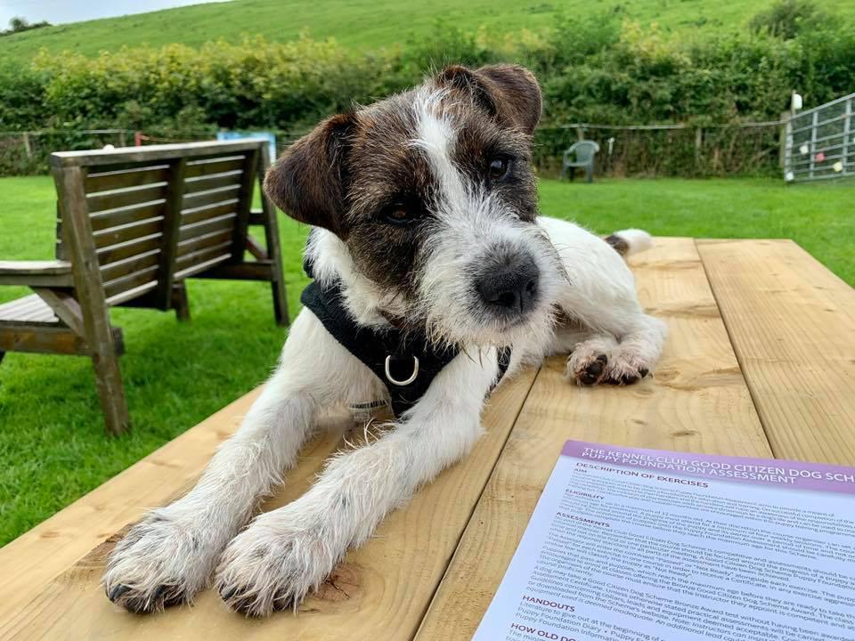 Puppy/Beginners Class