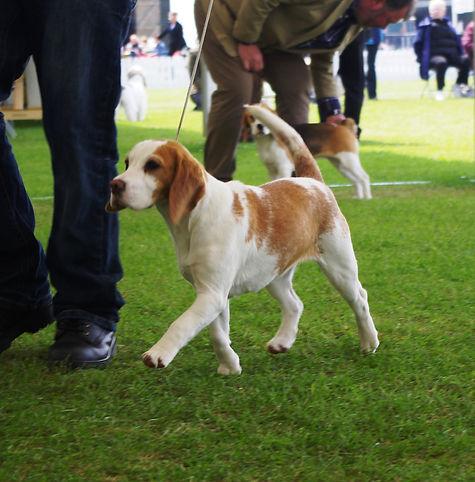 chemical free dog breeder
