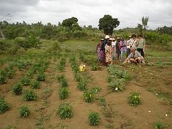 Madagascar 2006 (104)