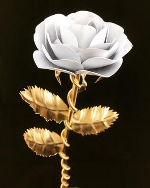 Premium Rose.jpg