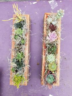 Succulent Troughs