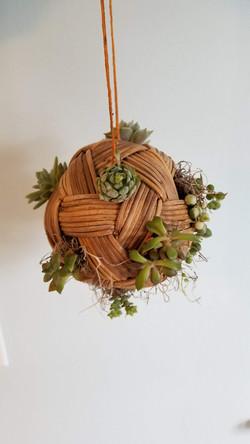 Succulent Hanging Ball