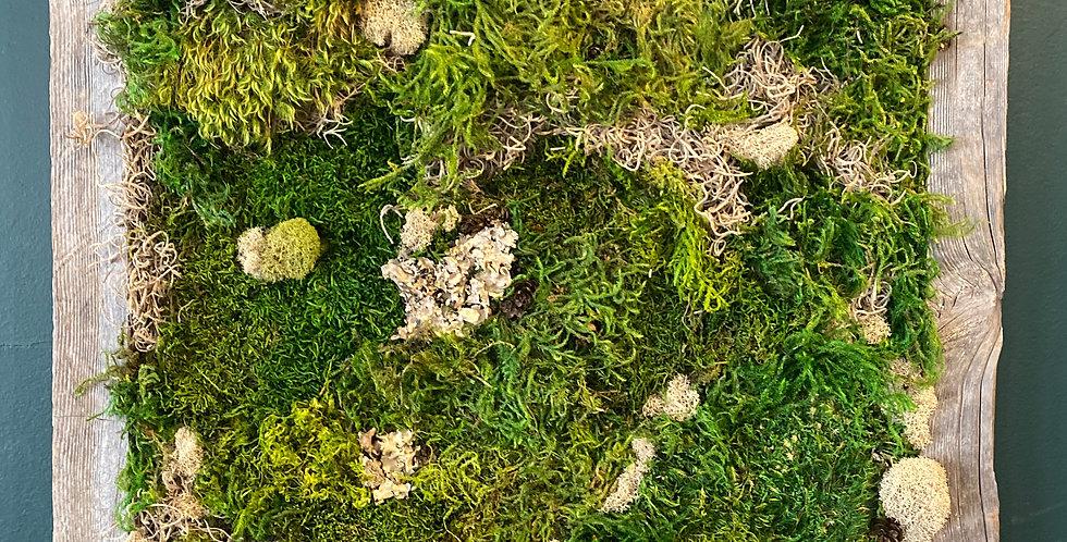 Barn Wood Framed Moss Art