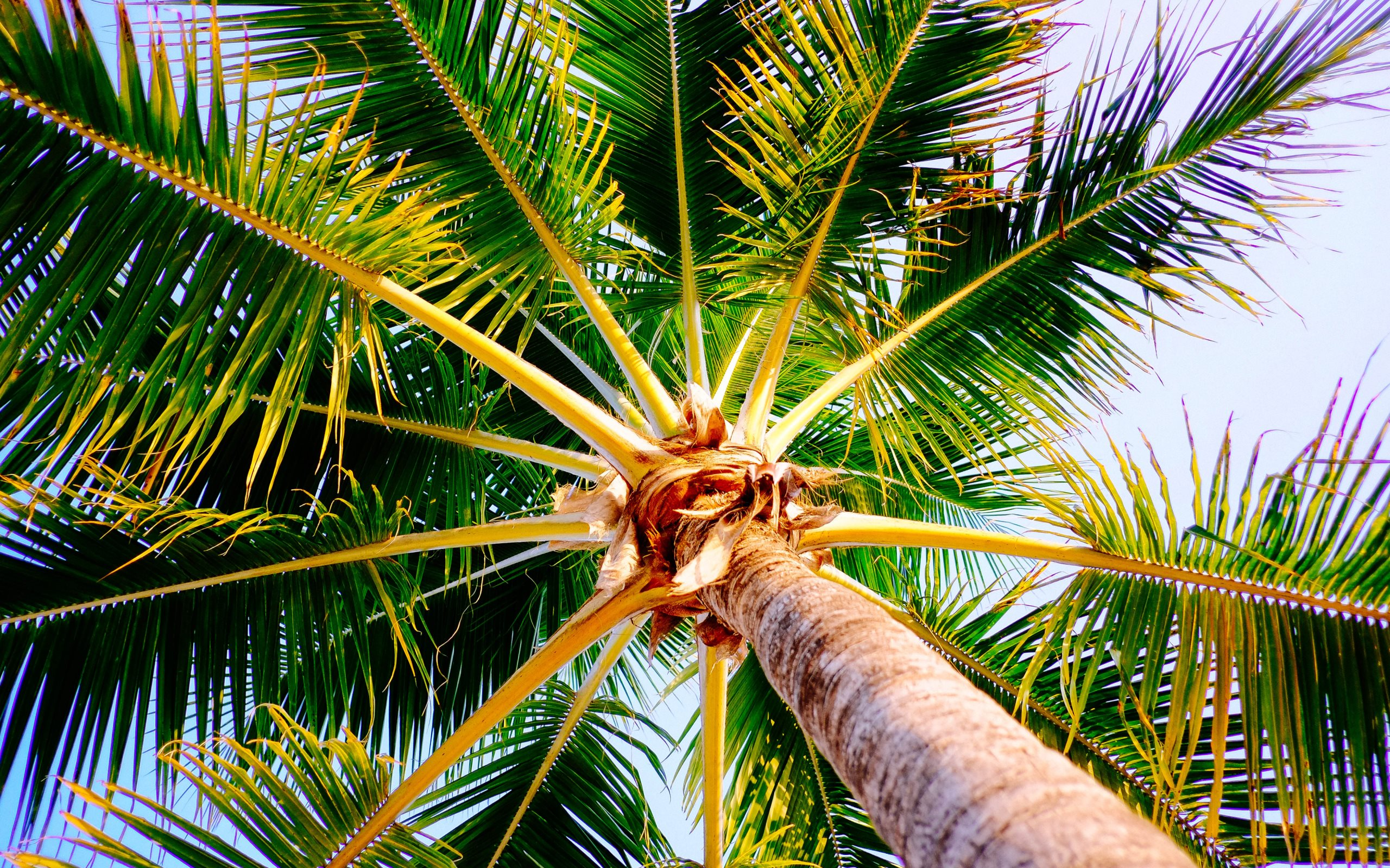 Palm tree from Montego Bay Jamaica