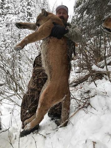 Winter Mountain Lion