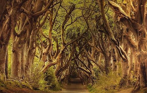 chemin d'arbres.jpg