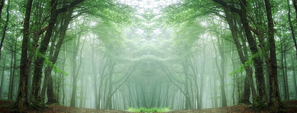 Forest-Cover Page.png