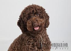 Pet portrait Hampton Va