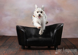 Dog portrait photographer Hampton Va