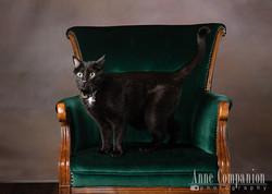 Cat photographer Hampton Va